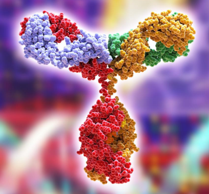 Monclonal Antibodies (mAbs)